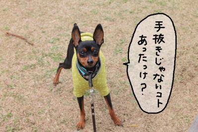 2013_03_23_9999_7.jpg