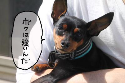 2013_04_07_9999_18.jpg