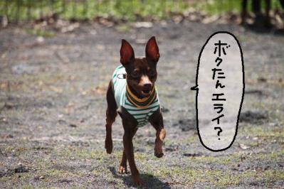 2013_04_14_9999_75.jpg