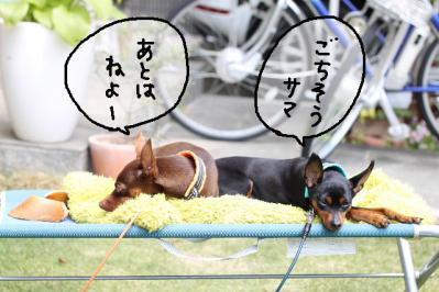 2013_05_01_9999_106.jpg