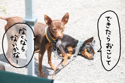 2013_05_04_9999_24.jpg