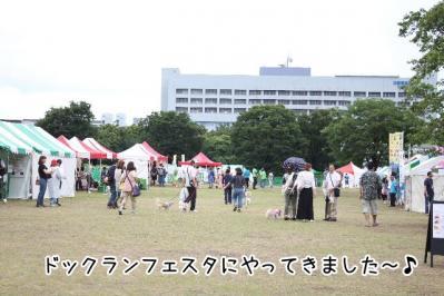 2013_06_16_9999_1.jpg