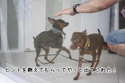 2013_06_16_9999_37.jpg