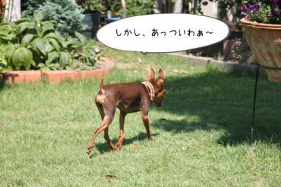 2013_07_09_9999_27.jpg