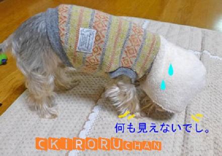 チロルちゃん2ブログ