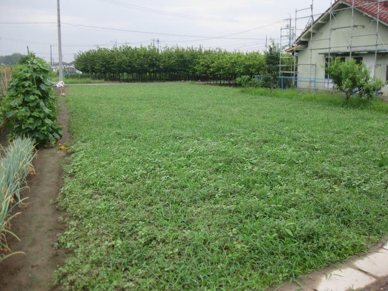 隣の畑13_07_18