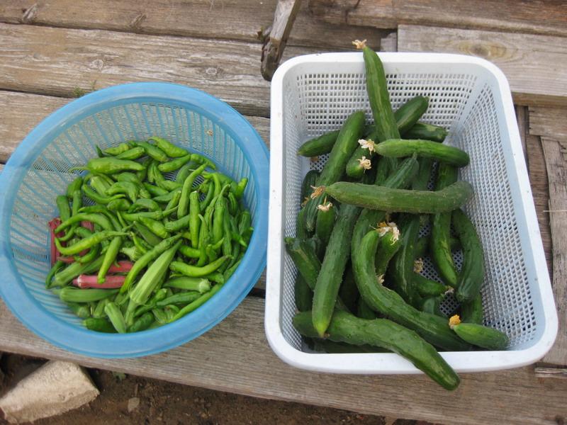 収穫2_13_07_22