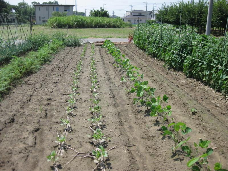 小豆&枝豆13_07_28