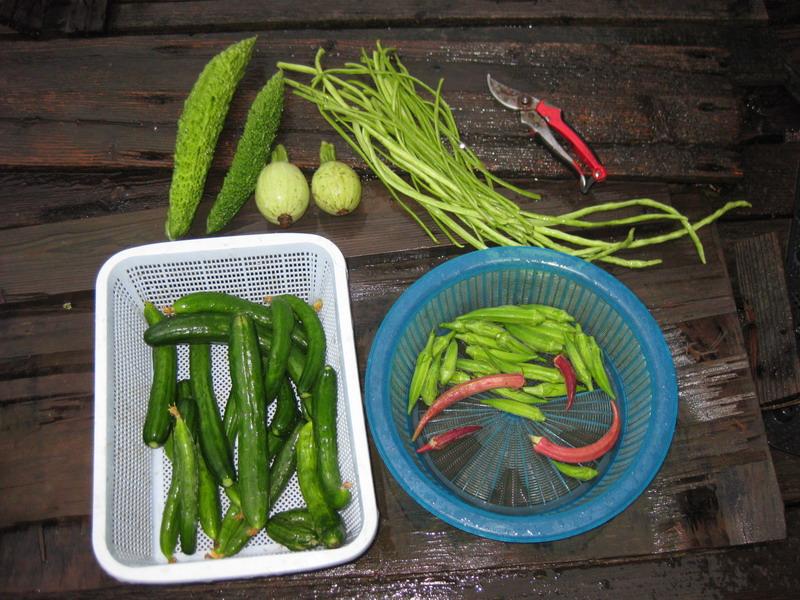 収穫13_07_29