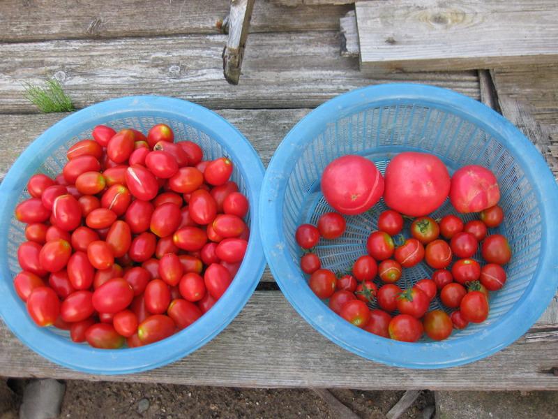 収穫2_13_07_31