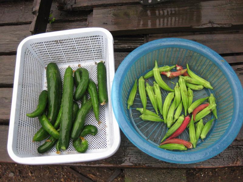 収穫2_13_08_06