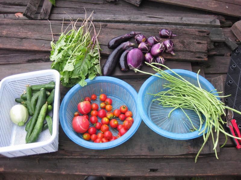 収穫13_08_05