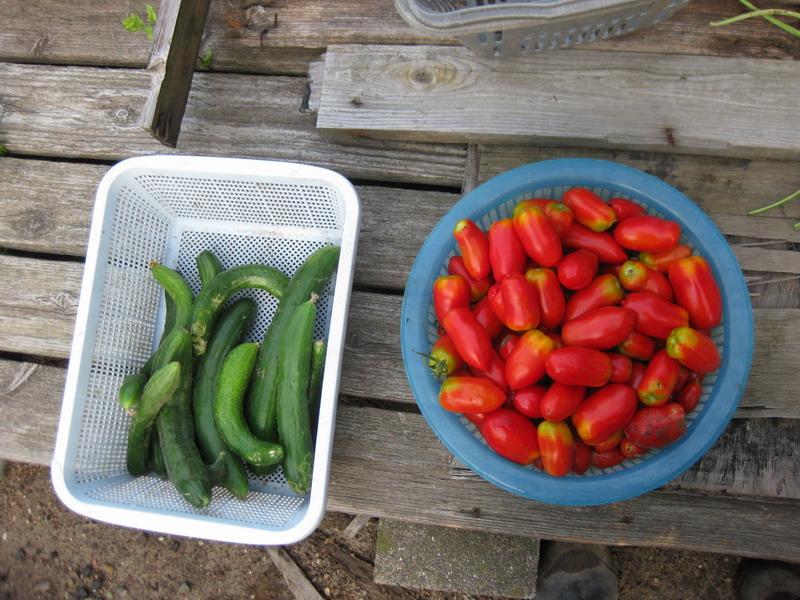 収穫2_13_08_08