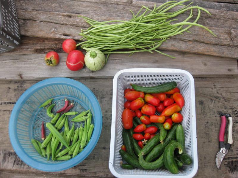 収穫1_13_08_09