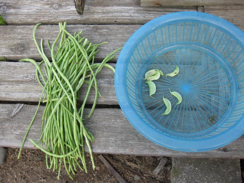 収穫2_13_08_10