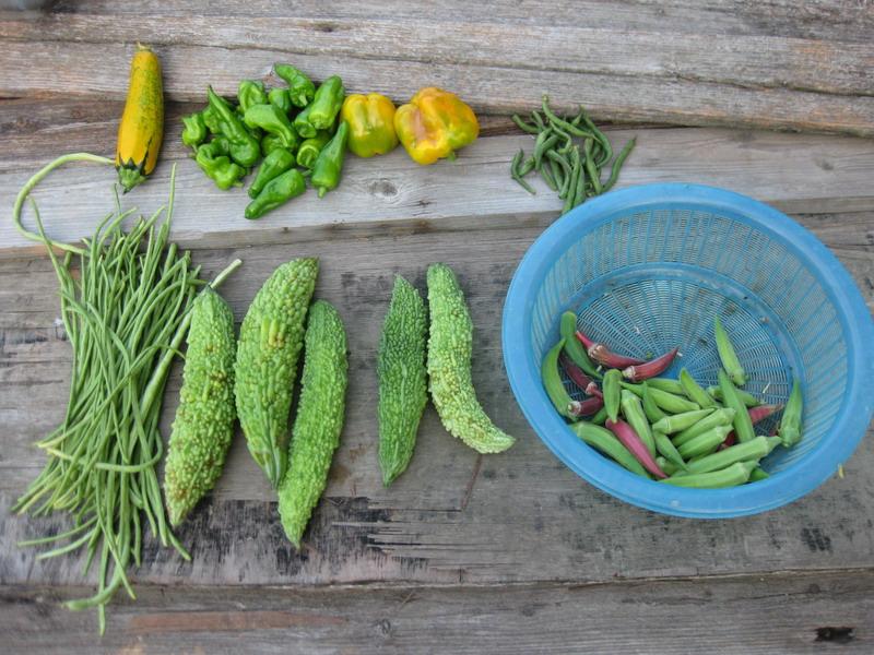 収穫1_13_08_11