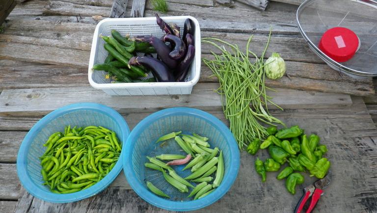 収穫13_08_13