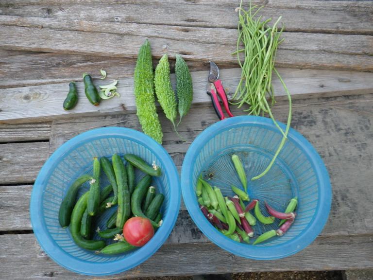 収穫13_08_14