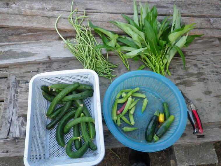 収穫13_08_17