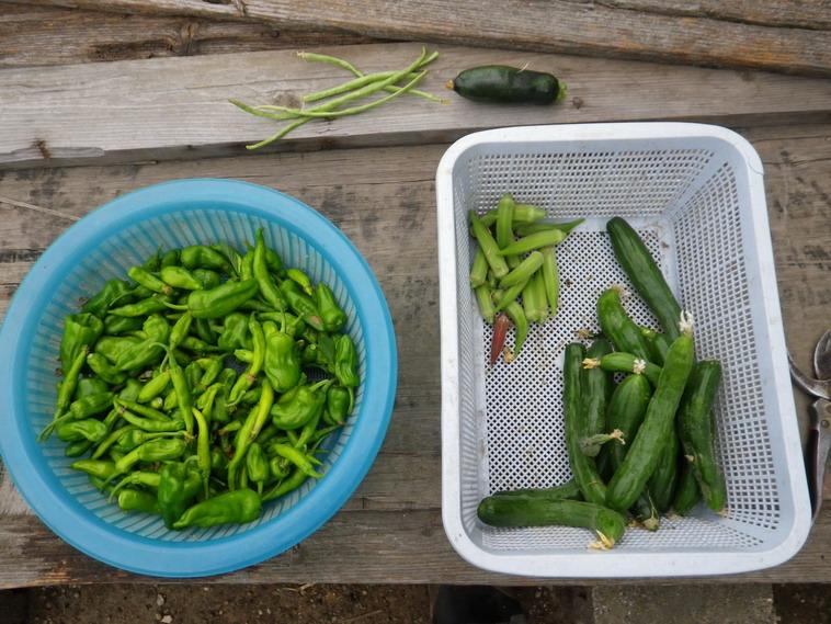 収穫13_08_22