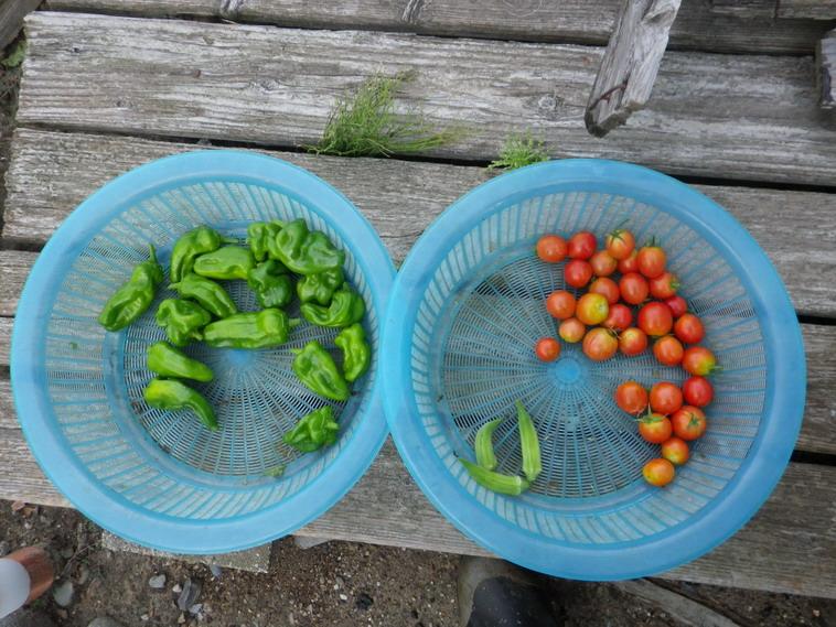 収穫2_13_08_28