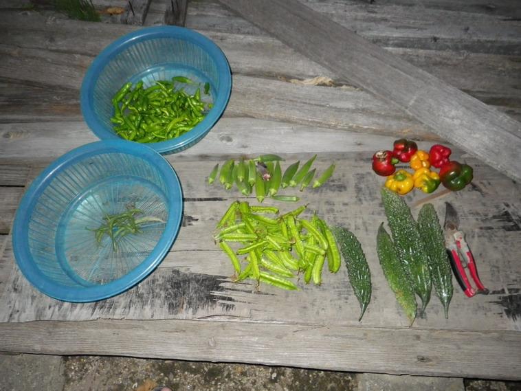 収穫13_09_22