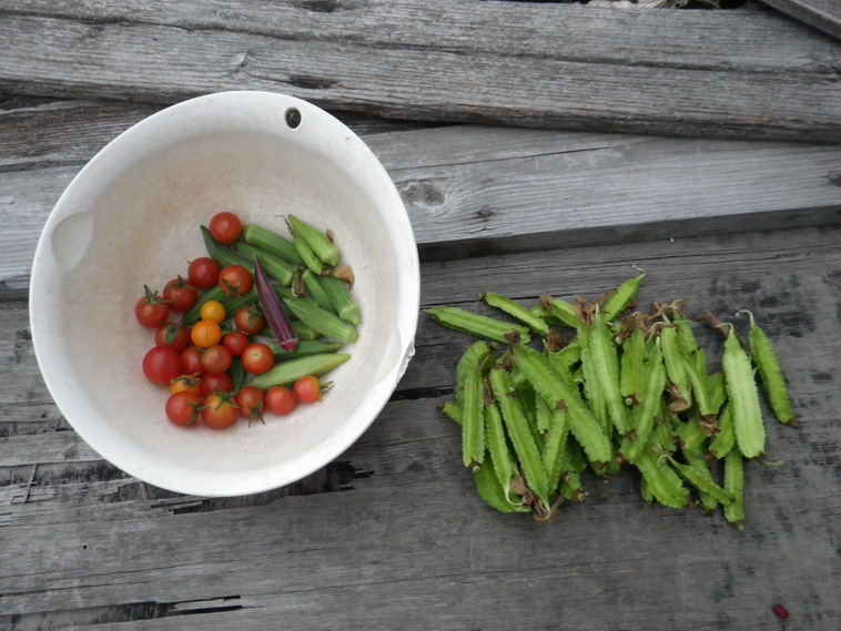 収穫13_09_30