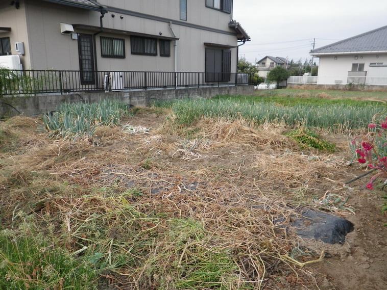 菜園№2_1_13_10_07