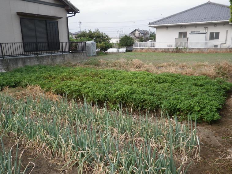 菜園№2_2_13_10_07