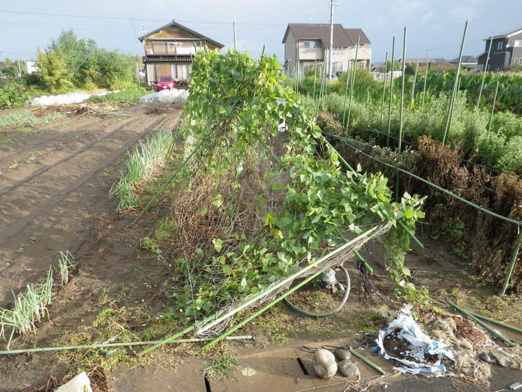台風の被害2_13_10_16