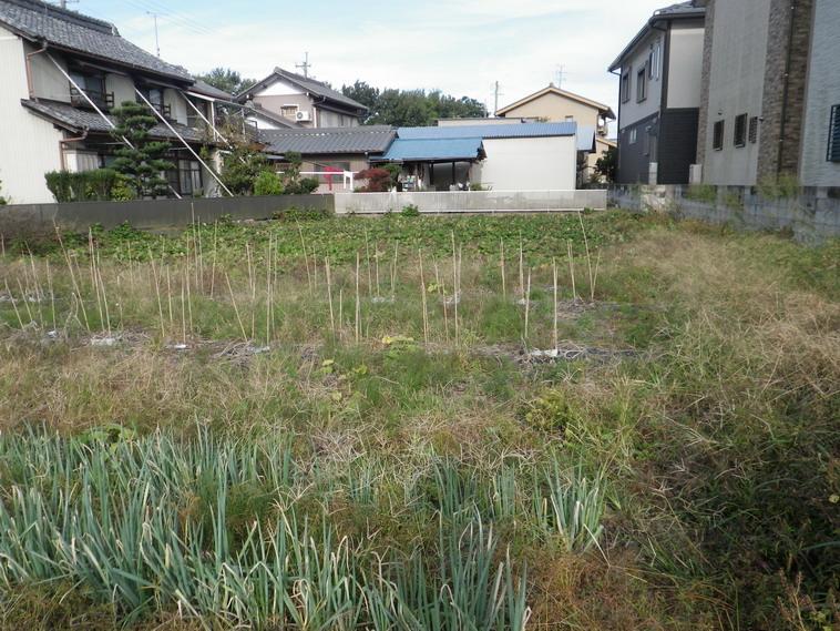 菜園№3_13_10_19