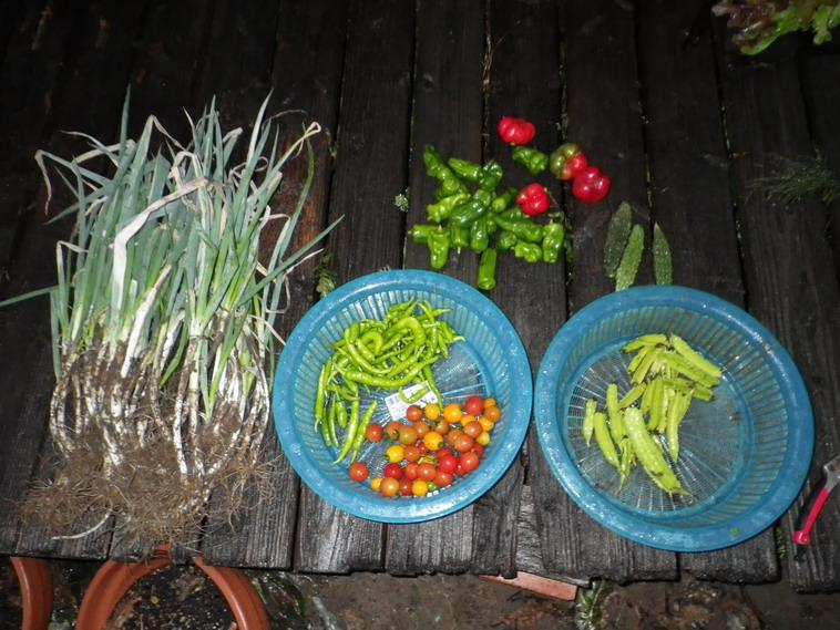 収穫3_13_10_20