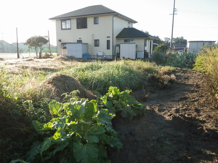 耕作放棄地13_10_21
