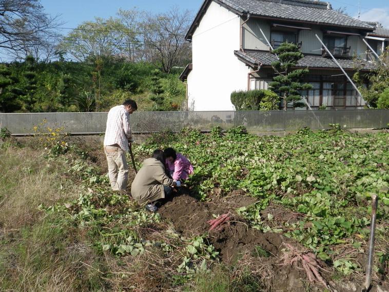 芋掘り13_10_27