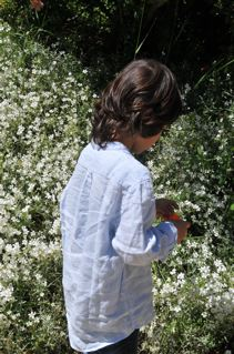 白い花とマティス