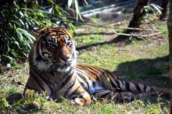 タイガー3