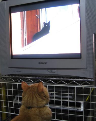 テレビにクギづけ