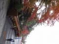 141122霧島神宮紅葉①