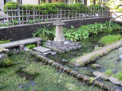 三島湧水photo