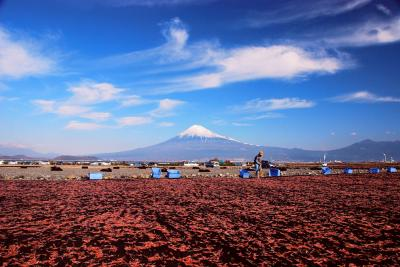 桜エビと富士山photo