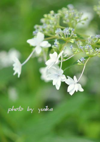 隅田の花火623-1