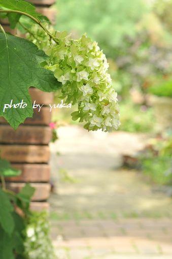 ガーデン702-1DSC_0146