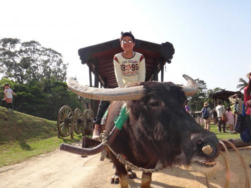 500水牛