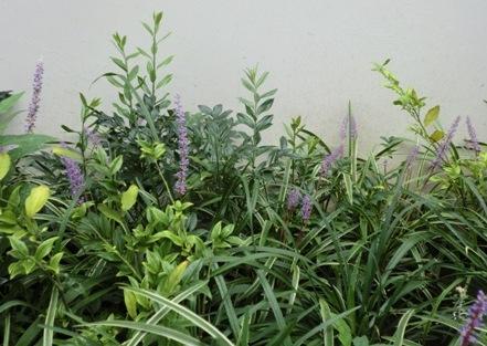 藪蘭の花2