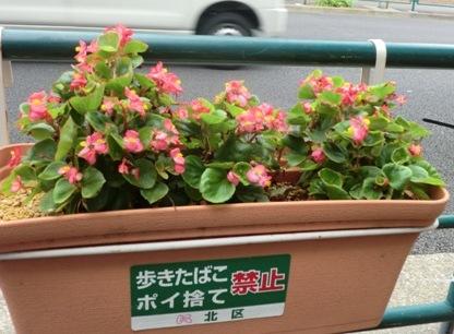 十条の花2