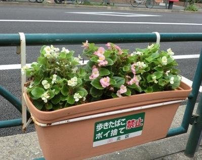 十条の花1