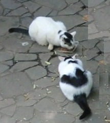 等々力猫1