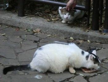 等々力猫21