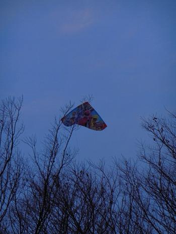 枝の上に捨てられた凧1