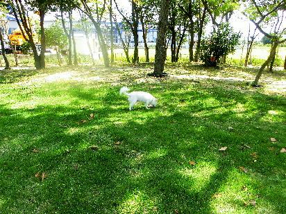 131030-銀時に芝生-6